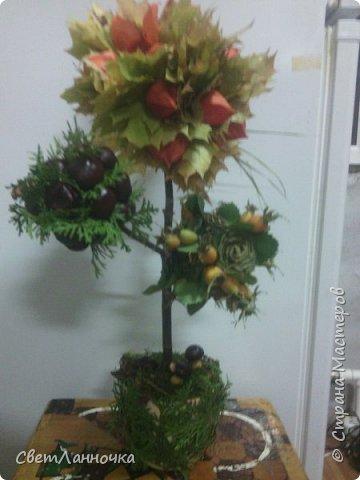 Осенний топиарий в садик фото 1