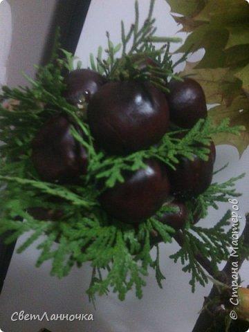 Осенний топиарий в садик фото 3