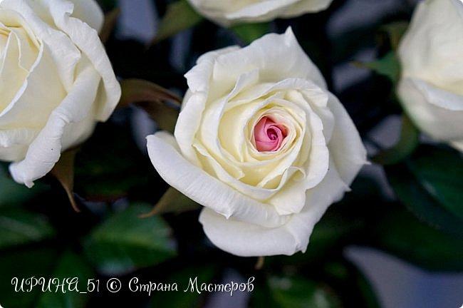 Здравствуйте! Сегодня я с букетом роз. Цветы выполнены из зефирного фома.  Приглашаю к просмотру.  фото 19