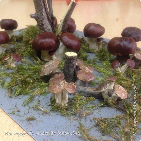 Грибы сделаны из каштанов. ( Каштан разрезать пополам, вычистить. Коричневая часть используется полностью, а из второй части вырезаются маленькие грибы. Ножки из пластилина).
