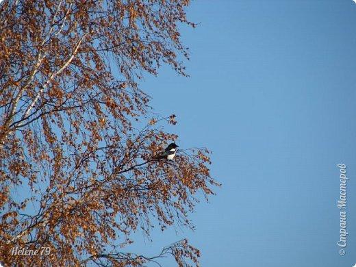 """""""Октябрь уж наступил — уж роща отряхает  Последние листы с нагих своих ветвей; Дохнул осенний хлад — дорога промерзает. Журча еще бежит за мельницу ручей.. фото 54"""
