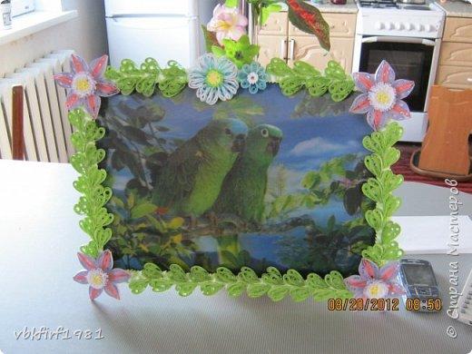 Цветы для попугаев. фото 1
