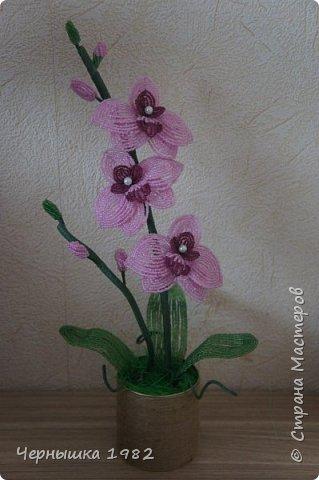 Мои орхидеи фото 2