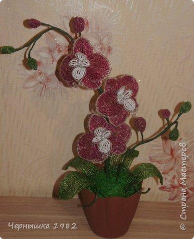 Мои орхидеи фото 4
