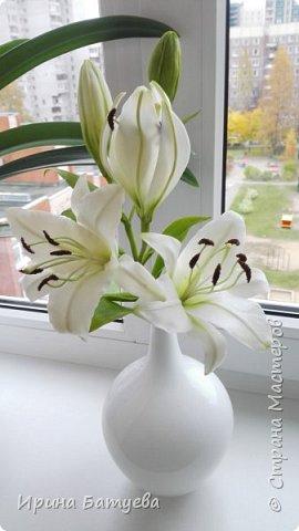 Это продолжение мастер-класса по белой лилии. В первой части мы сделали цветок лилии: http://stranamasterov.ru/node/1055126 . Здесь мы будем учиться делать листики, бутоны, а также собирать все это в ветку. фото 1