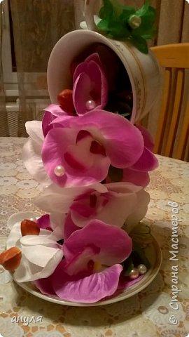Моя орхидея.