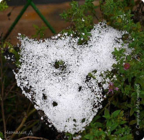 Доброго всем времени суток!!! Сегодня утром увидела первый в этом году снег (ну, скажем так, первый для меня) - крупенчатый, несерьезный, фрагментарный..... Но он присыпал последние цветики на нашем участке...... И я решила поделиться с Вами, добрые жители Страны Мастеров, подсмотренным.... фото 9