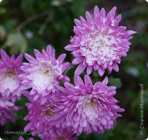 Доброго всем времени суток!!! Сегодня утром увидела первый в этом году снег (ну, скажем так, первый для меня) - крупенчатый, несерьезный, фрагментарный..... Но он присыпал последние цветики на нашем участке...... И я решила поделиться с Вами, добрые жители Страны Мастеров, подсмотренным.... фото 7