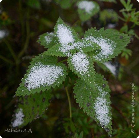 Доброго всем времени суток!!! Сегодня утром увидела первый в этом году снег (ну, скажем так, первый для меня) - крупенчатый, несерьезный, фрагментарный..... Но он присыпал последние цветики на нашем участке...... И я решила поделиться с Вами, добрые жители Страны Мастеров, подсмотренным.... фото 10