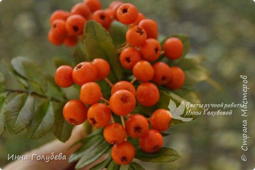 Вот такая оранжевая осень у меня)) фото 4