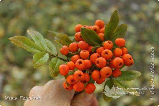 Вот такая оранжевая осень у меня)) фото 11