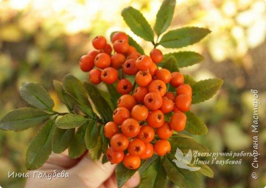 Вот такая оранжевая осень у меня)) фото 2