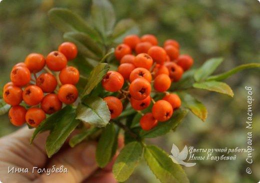 Вот такая оранжевая осень у меня)) фото 6