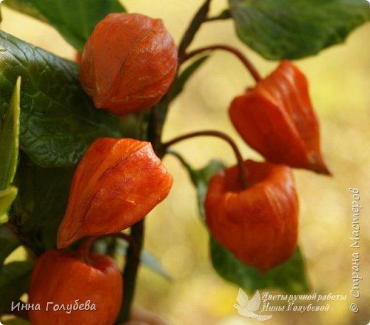 Вот такая оранжевая осень у меня)) фото 10