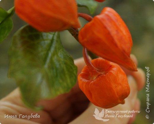 Вот такая оранжевая осень у меня)) фото 7