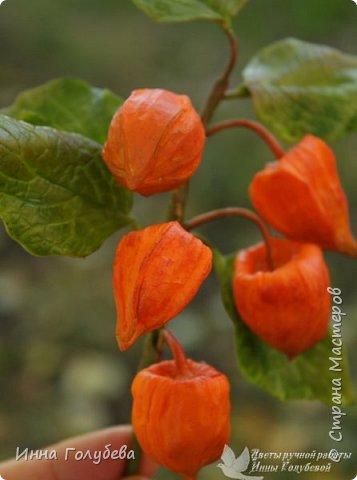 Вот такая оранжевая осень у меня)) фото 3