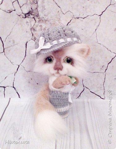 Котик Эндрю фото 4