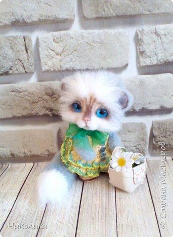 Котик Эндрю фото 6