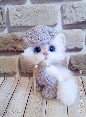 Котик Эндрю фото 1