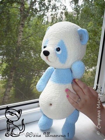 Панда  фото 5