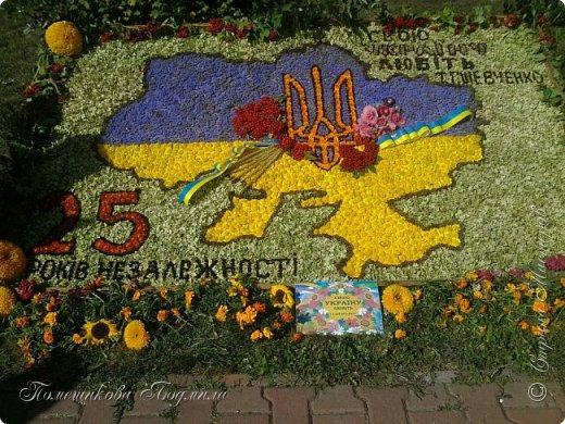 Здравствуйте! По установившейся традиции в  нашем славном курортном городке Миргороде ежегодно проходит выставка цветочных панно и стендов.Тематика всегда разная, но интересная.      В этом году цветочное панно должно было посвящаться 25-летию независимости Украины.В нашем садике долго думали, как воплотить эту идею...Я предложила вариант женщины-украинки в цветочном венке.Всем понравилось.А кто придумал-тот и делает.Спасибо коллеге,она нарисовала женский портрет, а все остальное делала я. фото 5