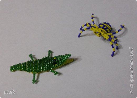 Крокодил и Паук фото 6