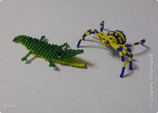 Крокодил и Паук фото 8