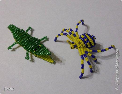 Крокодил и Паук фото 9