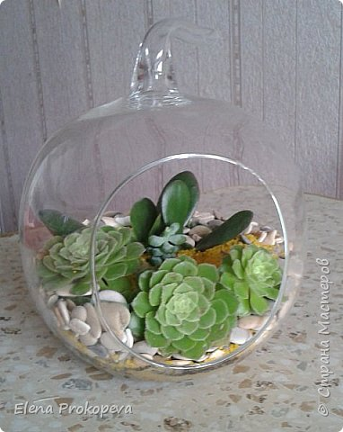 Мини-сад за стеклом фото 4