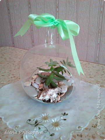Мини-сад за стеклом фото 5