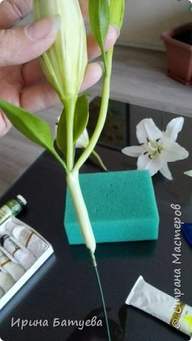 Это продолжение мастер-класса по белой лилии. В первой части мы сделали цветок лилии: http://stranamasterov.ru/node/1055126 . Здесь мы будем учиться делать листики, бутоны, а также собирать все это в ветку. фото 27
