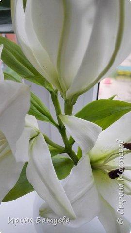 Это продолжение мастер-класса по белой лилии. В первой части мы сделали цветок лилии: http://stranamasterov.ru/node/1055126 . Здесь мы будем учиться делать листики, бутоны, а также собирать все это в ветку. фото 30