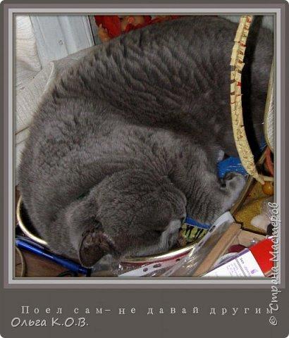 """Найс- буржуин  (отдыхает во время """"трудового"""" дня на крылечке фото 9"""