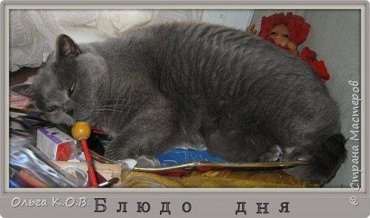 """Найс- буржуин  (отдыхает во время """"трудового"""" дня на крылечке фото 10"""