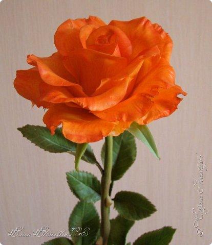 Доброго времени суток, жители страны!!! Я к вам с очередными цветочками: маки, и розочка))) фото 4