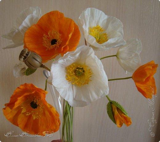 Доброго времени суток, жители страны!!! Я к вам с очередными цветочками: маки, и розочка))) фото 1