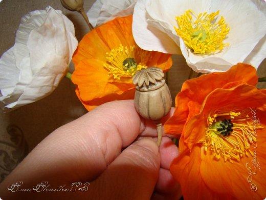 Доброго времени суток, жители страны!!! Я к вам с очередными цветочками: маки, и розочка))) фото 3