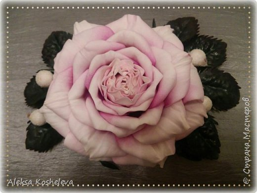 Роза Кэтрин фото 1