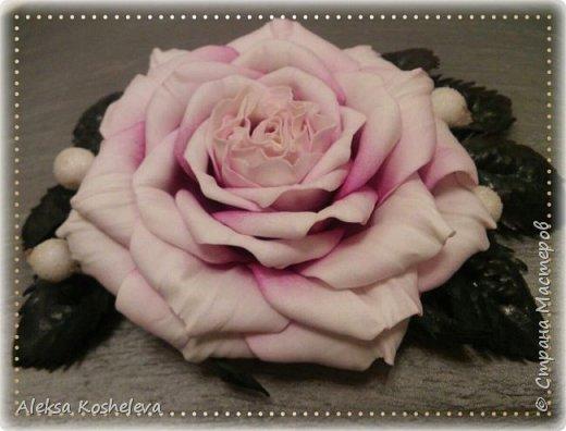 Роза Кэтрин фото 2