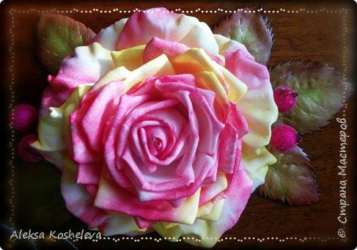 Роза Кэтрин фото 7