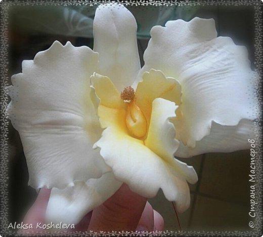 Роза Кэтрин фото 9