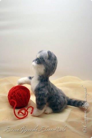 Котенок Юська фото 2