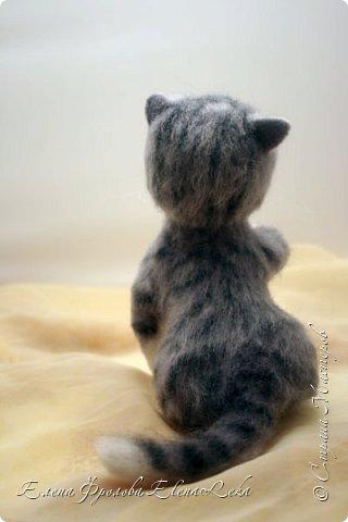 Котенок Юська фото 3