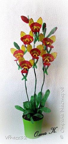 У меня немного наплелось)))  орхидея Ваниль выполнена на форуме Радуга рукоделий под руководством Натальи -Кузина фото 4