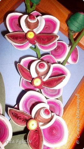 Орхидея фото 7