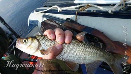 В начале октября выдалась хорошая погодка на выходных, и муж с товарищем поехали на речку Девятка на рыбалку. фото 27