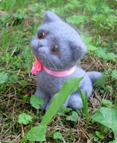 Котенок Найсик фото 1