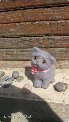 Котенок Найсик фото 3