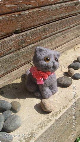 Котенок Найсик фото 4