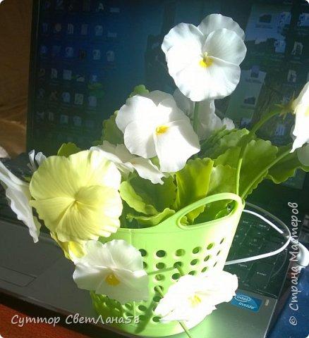 Доброе время суток! Мои новые букетики анютиных глазок.  фото 6